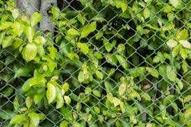 4 Ways To Give Your Chain Link Fence More Curb Appeal Diamond Fence Co