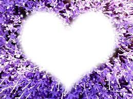 Montaje fotografico flores morados con corazon - Pixiz
