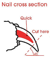 10 easy ways to cut your dog s nails