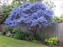 evergreen trees for very small gardens