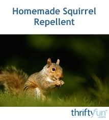 homemade squirrel repellent thriftyfun