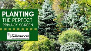 Planting The Perfect Privacy Screen Garden Goods Direct