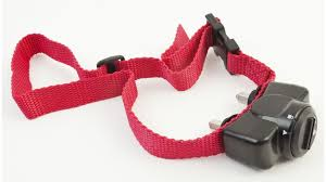 Electric Shock Collars For Pets To Be Banned Bbc News