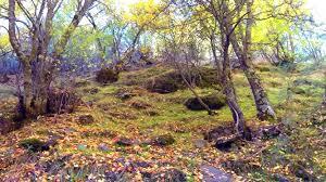 El Bosque Encantado del Camarate - Granadino Errante