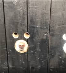 Dad Cuts Custom Windows In Door So The Dogs Can Say Hello To His Daughter Before She Even Enters The House