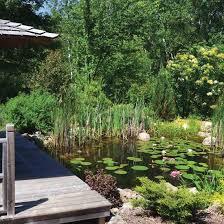 diy natural backyard pond diy