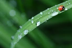 ✩ quotes kata kata hujan inggris dan artinya untuk inspirasi