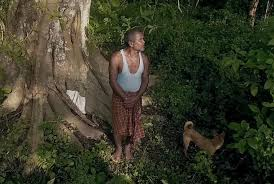 One Man Built A Forest By Planting 'a Tree A Day' For 40 Years
