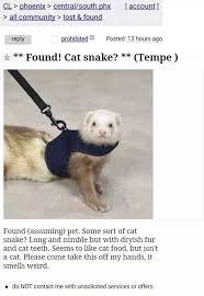 baby cat snake sleeping