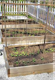 A Trellis For Growing Peas Ashley Hackshaw Lil Blue Boo