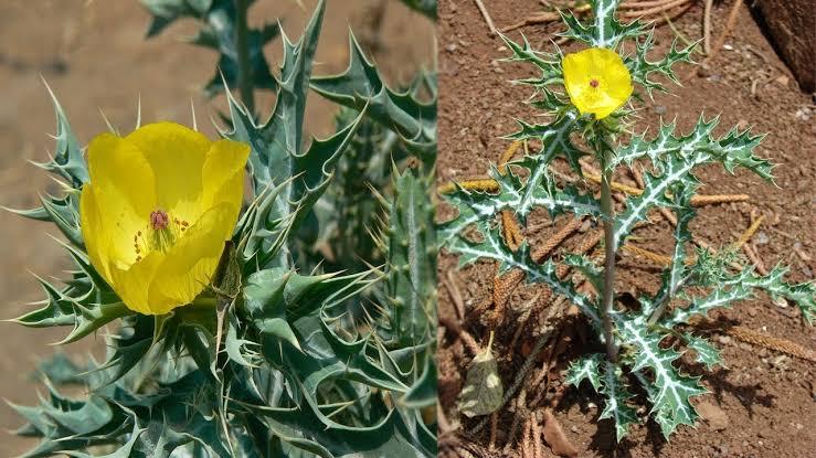 """Image result for इस पौधे की एक पत्ती दूर कर देती है बांझपन, बिना महंगे इलाज के घर में गूंज उठती है किलकारी"""""""