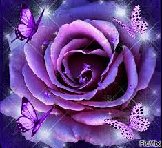 BIG PURPLE ROSE, LARGE PURPLE BUTTERFLIES, AND SMALL ...