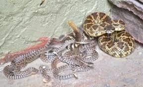 Snake Fence San Diego Snake Fence