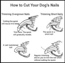 dog to tolerate nail t