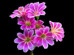 beautiful flowers wallpaper free