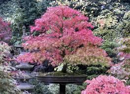 best plants to design a japanese garden