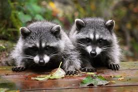 Wildlife Removal Services | Tampa | Nvirotect Pest Control