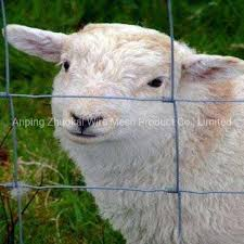 China Hot Sale Electric Welding Galvanized Wire Mesh Grassland Fence China Grassland Fence Fence