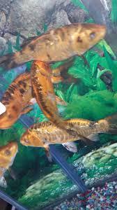 Pet PLUS ocho rios is at Alberta Simmons... - Pet PLUS ocho rios | Facebook