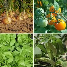 home vegetable garden ideas in india