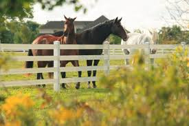 Horse Fence Installers In Toledo Ohio Lucas County