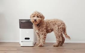 the best automatic dog feeders reviewed