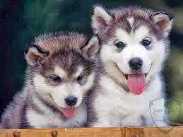 صور كلاب انواع الكلاب ومعلومات عن الكلب واشكاله ايجى صح