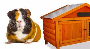 best wooden guinea pig cage tips and