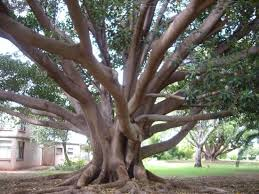 Lovely shady tree in Ada Ryan Gardens next to Whyalla Foreshore Motor Inn -  Picture of Foreshore Motor Inn, Whyalla - Tripadvisor