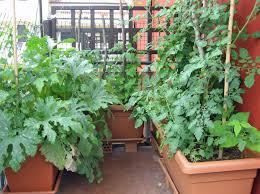 Being An Urban Gardener: Creating A City Vegetable Garden ...