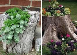 flower garden ideas on a tree stump