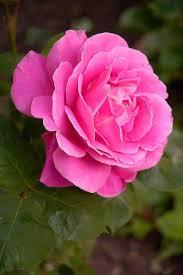 rose gardensouq com best s