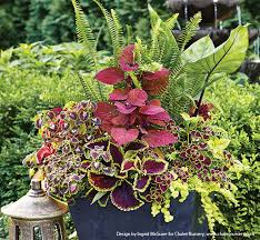 try ferns in your shade containers
