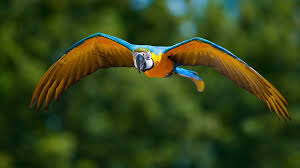 free modern macaw pictures the