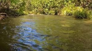 Som de rio, Relaxamento, Sons da natureza | Natureza, Música para ...