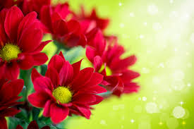 red flower bookay pink white