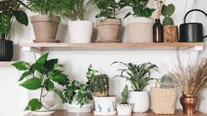 house plants for absolute beginners