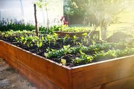 4 best raised garden bed options for