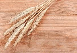 Agspring Signs Deal to Acquire General Mills Idaho Grain Business – Agspring