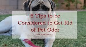 how to get rid of pet urine odor