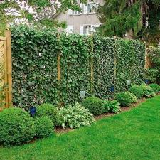 20 green fence designs plants to