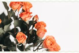 72 es about roses life love and