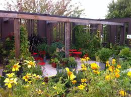 growing vegetables on your roof