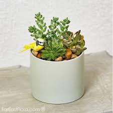 cactus plants singapore fareastflora com