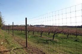 8 Foot Tall Deer Fence Deer Fence Fence Design Field Fence