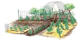 Vertical Gardening Techniques For Maximum Returns Mother Earth News