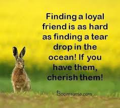best friendship sayings and friendship quotes finding a loyal