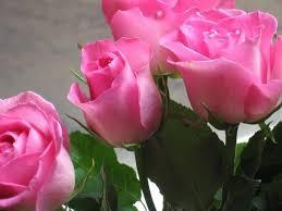 اشكال ورود طبيعية واو اجمل مناظر زهور تاخد العقل