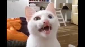 قطط تتكلم لغات غريبة مقاطع مدهشة ومضحكة جد ا Youtube