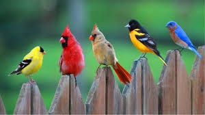 colorful bird wallpaper 25353